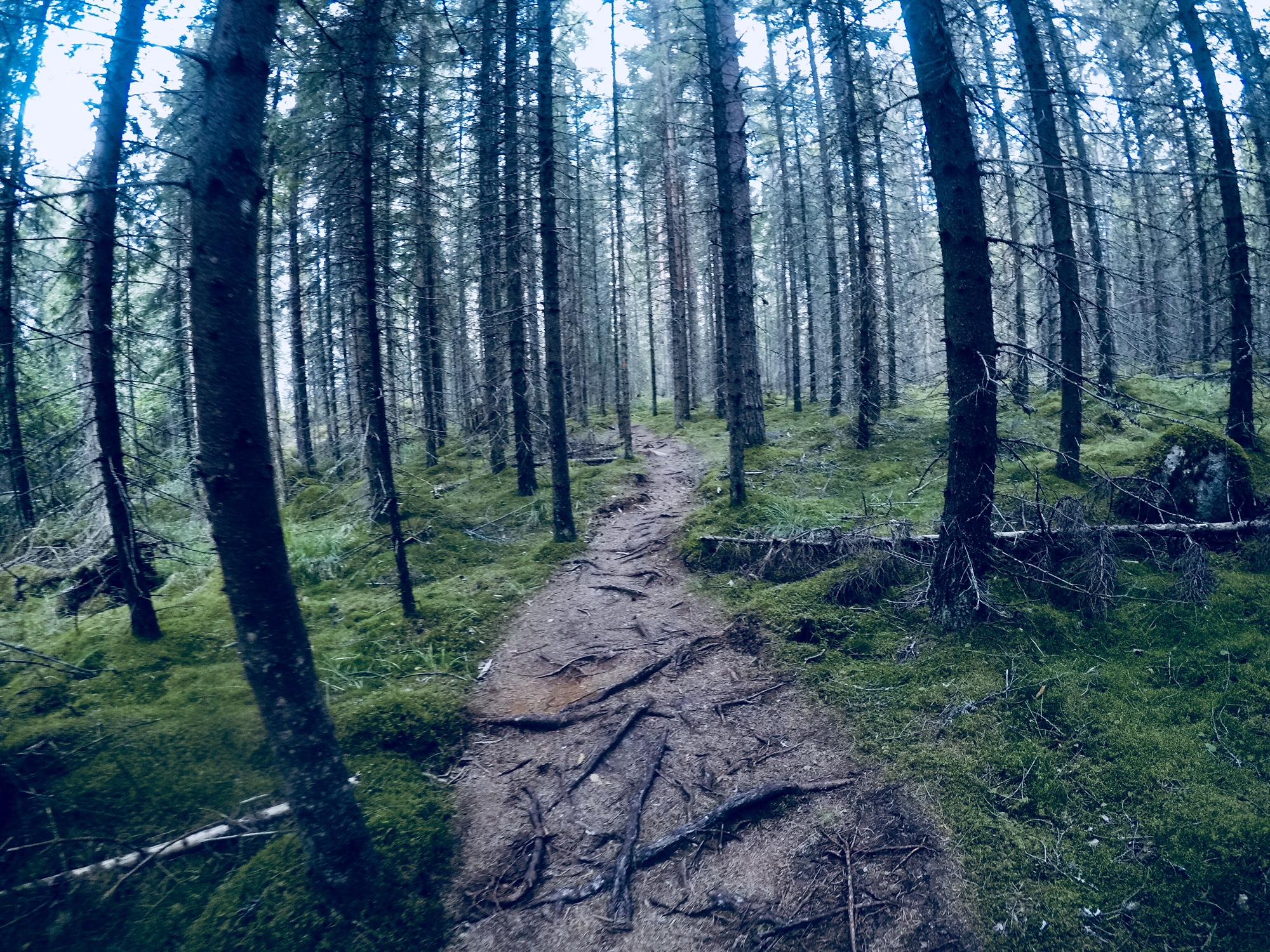 Vaeltamassa Repoveden kansallispuistossa